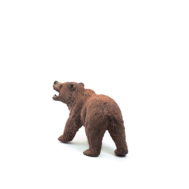 What Is A Bear