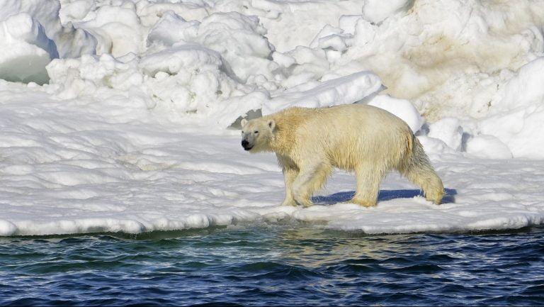Bear Market Example